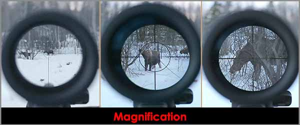best night vision scopes for coyote hunting