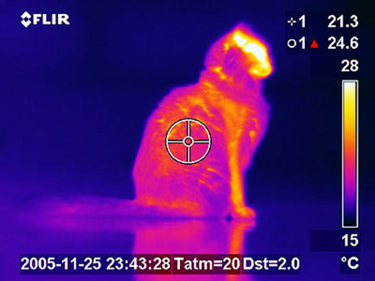 Thermogram of a Cat